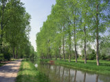 Tree Lined River Bank in Spring, Marais Poitevin, Deux Sevres Near Coulon, Poitou Charentes, France Photographic Print by Michael Busselle