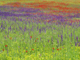 Wild Flowers in a Spring Meadow Near Valdepenas, Castile La Mancha, Spain Photographic Print by Michael Busselle