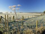 Frosty Rural Landscape, Puttenham, Surrey, England, UK Photographic Print by Pearl Bucknall