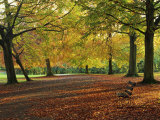 Trees in Autumn Colours and Park Bench Beside a Path at Clifton, Bristol, England, United Kingdom Photographic Print by Julia Bayne