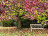 Bench under Liquidambar Tree, Hilliers Gardens, Ampfield, Hampshire, England, United Kingdom Photographic Print by Jean Brooks