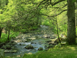Afon Artro Passing Through Natural Oak Wood, Llanbedr, Gwynedd, Wales, United Kingdom, Europe Lámina fotográfica por Pearl Bucknall