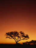 Single Tree Silhouetted Against a Red Sunset Sky in the Evening, Kruger National Park, South Africa Photographic Print by Paul Allen