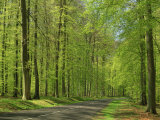 Empty Rural Road Through Woodland in the Forest of Compiegne, Aisne, Picardie, France Photographic Print by Michael Busselle