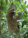 Three Toed Sloth, Manuel Antonio Park, Costa Rica, Central America Photographic Print by Jean-luc Brouard