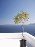 Santorini, Cyclades, Greek Islands, Greece, Europe Photographic Print by Angelo Cavalli
