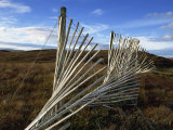 Snow Fences and Moorland, Near Dundonnell, Wester Ross, Highlands, Scotland, United Kingdom, Europe Photographic Print by Neale Clarke