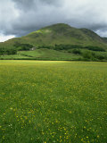 Buttercup Meadow, Wilkinsyke Farm, Lake Distict National Park, Cumbria, England, United Kingdom Photographic Print by Neale Clarke