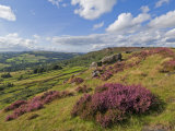 Heather Moorland, Baslow Edge Near Curbar, Peak District National Park, Derbyshire, England, UK Photographic Print by Neale Clarke
