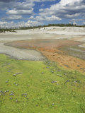 Pinwheeel and Whirligig Geysers Runoff, Porcelain Basin, Yellowstone National Park, Wyoming, USA Photographic Print by Neale Clarke