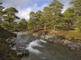 Scots Pine Forest and Lui Water, Deeside, Cairngorms National Park, Aberdeenshire, Scotland, UK Photographic Print by Gary Cook