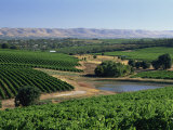 Vineyards, Oliverhill Wines, Mclaren Vale, South Australia, Australia, Pacific Photographic Print by Neale Clarke