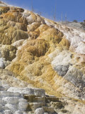 Palette Spring Terrace, Mammoth Hot Springs, Yellowstone National Park, Wyoming, USA Photographic Print by Neale Clarke