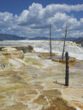 Dead Tree Trunks, Canary Spring, Mammoth Hot Springs, Yellowstone National Park, Wyoming, USA Photographic Print by Neale Clarke