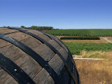 Old Wine Barrel, Maxwell Wines, Mclaren Vale, South Australia, Australia, Pacific Photographic Print by Neale Clarke