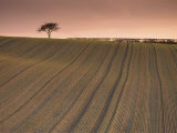 Lone Tree in Frosted Ploughed Field, Farnsfield, Nottinghamshire, England, United Kingdom, Europe Photographic Print by Neale Clarke