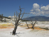 Canary Spring, Top Main Terrace, Mammoth Hot Springs, Yellowstone National Park, Wyoming, USA Photographic Print by Neale Clarke