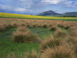 Landscape View of Grass and Field, with Lomond Hill Beyond from Milnathort, Scotland, UK Photographic Print by Kathy Collins