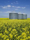 Canola Field in Saint Agathe, Winnipeg Region, Manitoba, Canada, North America Photographic Print by Richard Cummins
