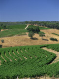 Vineyards, Mclaren Vale, Clarendon, South Australia, Australia, Pacific Photographic Print by Neale Clarke