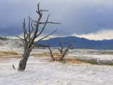 Canary Spring, Main Terrace, Mammoth Hot Springs, Yellowstone National Park, Wyoming, USA Photographic Print by Neale Clarke