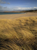 Grass and Sand Dunes on the Coast, Mellon Udridge, Wester Ross, Highlands, Scotland, United Kingdom Photographic Print by Neale Clarke