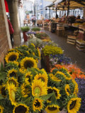 Sunflowers for Sale in Rialto Market, Venice, Veneto, Italy, Europe Photographic Print by Martin Child