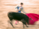 Young Bulls in the Main Square Used as the Plaza De Toros, Chinchon, Comunidad De Madrid, Spain Photographic Print by Marco Cristofori