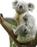 Koala Bear Cardboard Cutouts