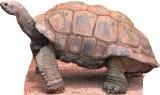 Tortoise Cardboard Cutouts