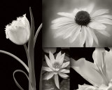 Summer Garden I Print by Dennis Frates