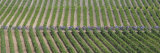 Peloton Rides Through Vineyards in Third Stage of Tour de France, July 6, 2009 Photographic Print