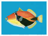 Humuhumu Engraving, Hawaii State Fish Posters by Steve Strickland