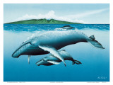 Mother and Child, Hawaiian Humpback Whales Posters by Mark Mackay