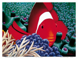 Diva, Tomato Clown Fish Prints by Mark Mackay
