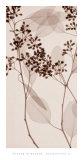 Eucalyptus II Affiches par Steven N. Meyers