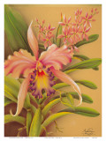 Pink Cattleya Orchid Flower Prints by Frank Oda