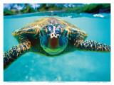 Honu, Turtle Posters af Kirk Lee Aeder