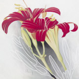 Day-Lilies II Posters by Franz Heigl