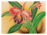 Pink Cattleya Orchid Posters by Moki Hana