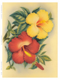 Hawaiian Hibiscus Prints by Eve Hawaii