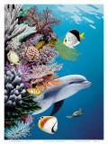 Arrecife del delfín Pósters por Mark Mackay