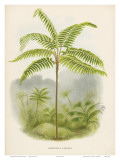 Tree Fern, 18th Century Posters by Pieter De Pannemaeker
