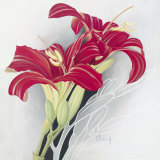 Day-Lilies I Prints by Franz Heigl
