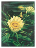 Blooming Cereus with Full Moon, Hawaii Prints by Ted Mundorff