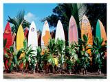 Old Surfboards Never Die, Hawaii Affiches par Bernard Fickert