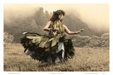 Swaying Skirt, Hawaiian Hula Dancer Poster von Alan Houghton