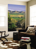 Vineyards, Barossa Valley, South Australia, Australia Wall Mural by Doug Pearson