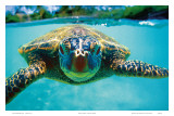 Honu, Hawaiian Sea Turtle Art par Kirk Lee Aeder