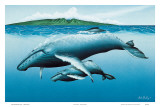 Mother and Child, Hawaiian Humpback Whales Art by Mark Mackay